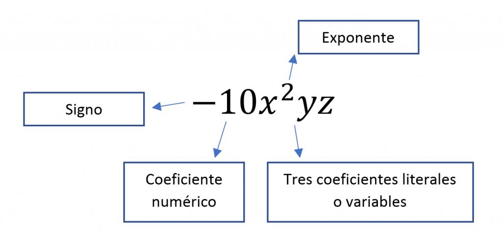 Elementos de un termino algebraico